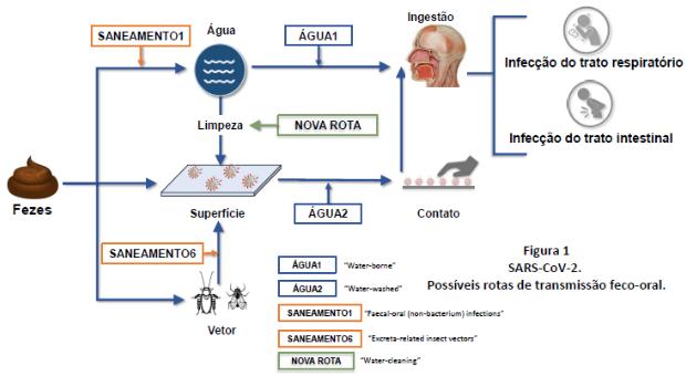 transmissão fecal-oral da covid-19